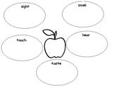 5 senses graphic organizer for apples