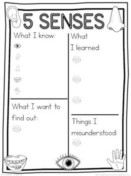 5 senses schema  worksheet