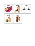 5 senses visuals