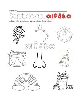 5 sentidos