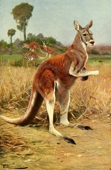 50 Australian Wildlife illustrations to use for anything you like!