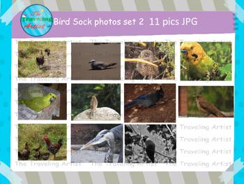 Stock Bird Photographs Set 2