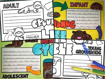 Groundhog Life Cycle Activity: Collaborative Poster