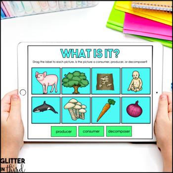 Food chains & food webs for Google Classroom DIGITAL