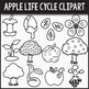 Apple Life Cycle Clipart