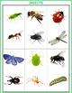 Autism Matching File Folders -Spring