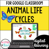 Animal life cycles for Google Classroom DIGITAL
