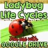 Ladybug Life Cycle for Google Drive & Google Classroom