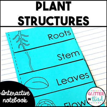 Plant structures and parts of a plant Interactive Notebook