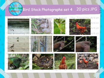 Stock Bird Photographs Set 4