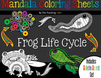 Frog life cycle Mandala Coloring  & Bulletin Board Set