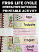 Frog Life Cycle Craft, Frog Life Cycle Interactive Notebook Activity