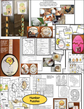 Life Cycle Of A Chicken: With Crafts, Games & Hatching Activities
