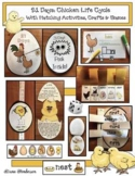 Life Cycle Of A Chicken With Crafts, Games & Chick Hatching Activities