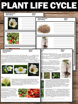 plant life cycle worksheets strawberries science reading comprehension. Black Bedroom Furniture Sets. Home Design Ideas