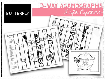3-Way Life Cycle Agamograph Collection w/ Apple Life Cycle & Pumpkin Life Cycle