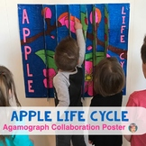 Apple Life Cycle 3-Way Agamograph Collaboration Poster - Great Fall Activity!
