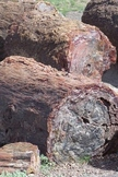 50+ Photographs~Commercial~Petrified Forest~Painted Desert