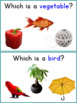 Which Qhestions, Receptive Language Worksheets - Select Item by Class