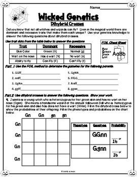 Halloween Genetics Worksheet (Dihybrid Crosses) by Schilly ...