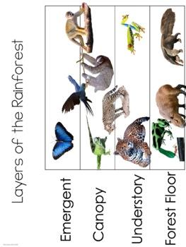 Rainforest Layers 3 Part Cards