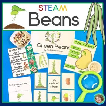 Beans STEAM / STEM Investigations
