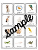 500 Vocabulary Photo Cards in Two Sizes