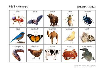 "525 Mini Photo Vocabulary Cards 1.75"" - PECS Speech Therapy Autism SpEd ESL"