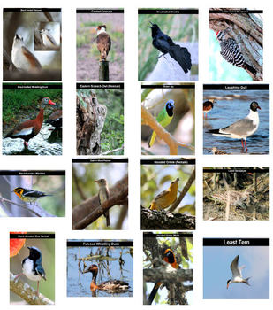 54 Stock Photos - U.S. Birds