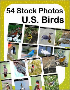 54 Stock Photos - U.S. Birds