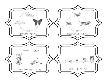 5TH GRADE INSECT METAMORPHOSIS  {STAAR}