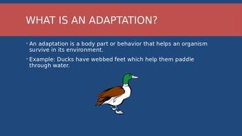 5th Grade Animal Adaptation Power Point
