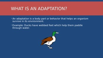 5th Grade Animal Adaptation Power Point