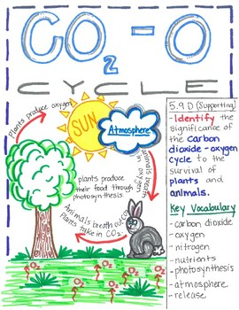 5th Grade Carbon Dioxide Oxygen Cycle