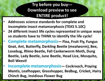 5th Grade Insect Life Cycles: Complete, Incomplete Metamorphosis (STAAR Science)