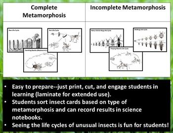 metamorphosis science worksheets grade 5 metamorphosis best free printable worksheets. Black Bedroom Furniture Sets. Home Design Ideas