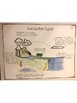 5th Grade Interactive Notebook: Earth Systems - Water Cycle & Climate