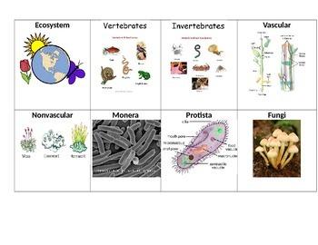 5th Grade Living Systems Vocabulary