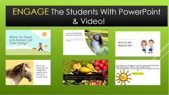 5th Grade Science The Source of All Food Energy is the Sun NGSS 5-PS3-1 Aligned