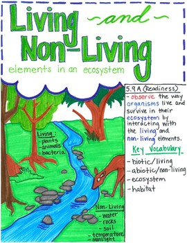 5th grade Biotic and Abiotic factors