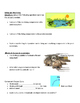 5th grade Science Category 4 review