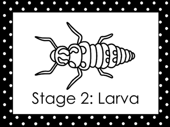 6 Black and White Ladybug Life Cycle Printable Posters/Anchor Charts.