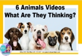 6 Funny Animal Videos - What Are They Thinking?  NO PRINT