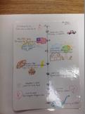 6 Grade SC social studies Personal Timeline Activity