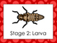 6 Ladybug Life Cycle Printable Posters/Anchor Charts.