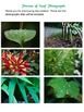 6 Leaf Photos
