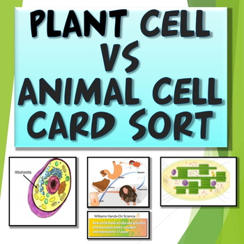 Plant Vs. Animal Cell Card Sort: Humans and Cells as Systems