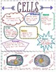 7.12D Cell Structure and Function Creative Notes
