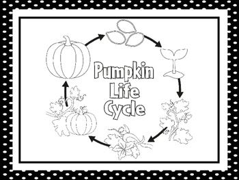 7 Black and White Pumpkin Life Cycle Printable Posters/Anc