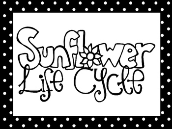 7 Black and White Sunflower Life Cycle Printable Posters/Anchor Charts.